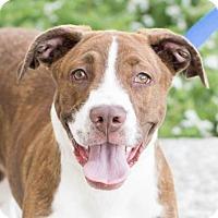 Adopt A Pet :: Maggie - Modesto, CA