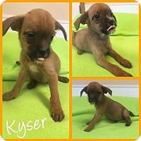 Adopt A Pet :: Kyser - Arlington, TX