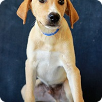 Adopt A Pet :: Aladin - Waldorf, MD