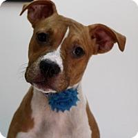 Adopt A Pet :: Audrey - Picayune, MS