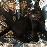 Adopt A Pet :: Emerald - Tampa, FL