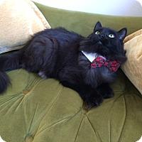Adopt A Pet :: Peppi - Toronto, ON