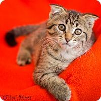 Adopt A Pet :: Wilbur - Colorado Springs, CO