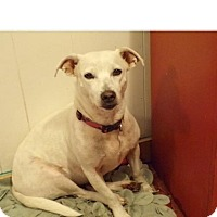 Adopt A Pet :: Bella and Blanca - Sterling Heights, MI