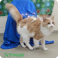 Adopt A Pet :: Scrooge - Bucyrus, OH