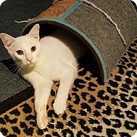 Adopt A Pet :: Bernie (bonded to Herman) - Los Angeles, CA