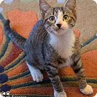 Adopt A Pet :: Finnegan - Merrifield, VA