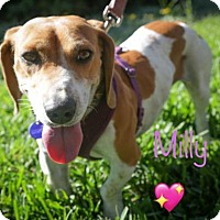 Adopt A Pet :: Milly - Los Angeles, CA