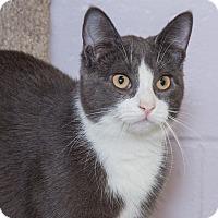Adopt A Pet :: Sebastian - Elmwood Park, NJ