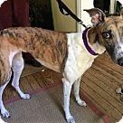 Adopt A Pet :: Henrietta