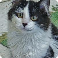 Adopt A Pet :: Elsa - Chambersburg, PA