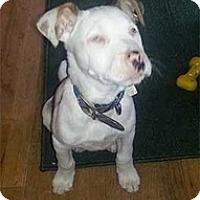Adopt A Pet :: Joey - Philadelphia, PA