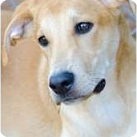 Adopt A Pet :: Bentley - Chesapeake, VA