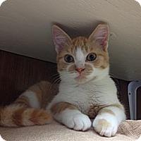 Adopt A Pet :: Jake Owen - Byron Center, MI