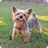 Adopt A Pet :: *Jack - PENDING - Westport, CT