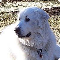 Adopt A Pet :: Katie - Piqua, OH