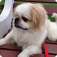 Adopt A Pet :: Simba - Jacksonville, FL