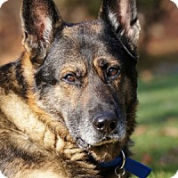 Adopt A Pet :: Aros - Wayland, MA