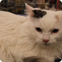 Adopt A Pet :: Angel - Warrenton, MO