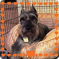 Adopt A Pet :: Dex - Sharonville, OH