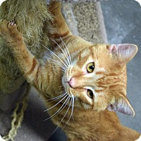 Adopt A Pet :: Zoom - Fremont, NE