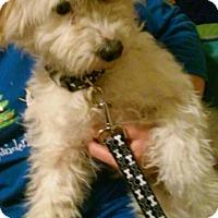Adopt A Pet :: Tina - Ogden, UT