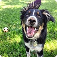 Adopt A Pet :: Porter - Minneapolis, MN