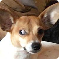 Adopt A Pet :: Jackson - Staunton, VA