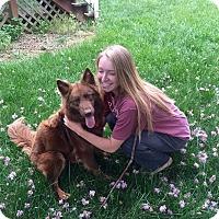 Adopt A Pet :: COURTESY POST: Moki - Nashville, TN