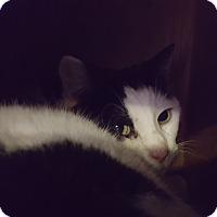 Adopt A Pet :: Bubbles - Elyria, OH