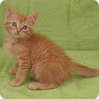Adopt A Pet :: Carter - Elkhorn, WI