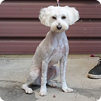 Adopt A Pet :: Lucinda - Los Angeles, CA