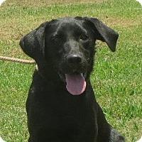 Adopt A Pet :: Miracle - Greenville, RI