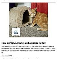 Adopt A Pet :: Aries - Hamilton, ON