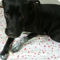 Adopt A Pet :: Sasha - Clarksville, AR
