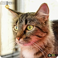 Adopt A Pet :: Vanessa (Nessa) - St Paul, MN