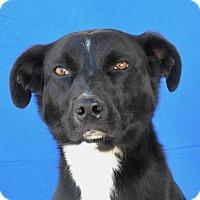 Adopt A Pet :: Bickerton - Pagosa Springs, CO