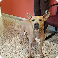 Adopt A Pet :: Matilda - Salem, OR