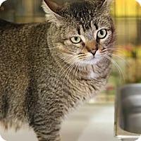 Adopt A Pet :: Pogo - Baton Rouge, LA