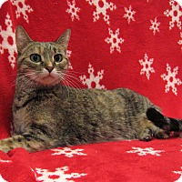 Adopt A Pet :: Ivy - Redwood Falls, MN