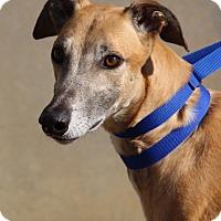Adopt A Pet :: Anchor - Ashland City, TN