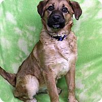 Adopt A Pet :: HAILEY - Westminster, CO