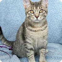 Adopt A Pet :: Isabel - St Louis, MO