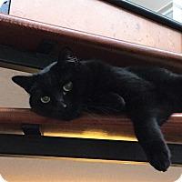 Adopt A Pet :: Leo - Vancouver, BC