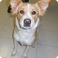 Adopt A Pet :: Athena - Lockhart, TX