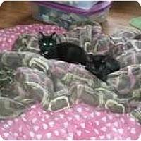 Adopt A Pet :: 4 kittens - Murfreesboro, TN