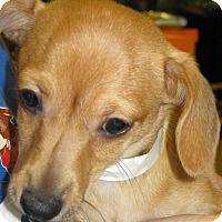 Adopt A Pet :: Byron - Phoenix, AZ