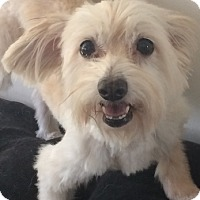 Adopt A Pet :: Gypsy - Orlando, FL