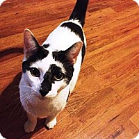 Adopt A Pet :: Dash - Oviedo, FL