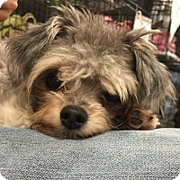 Adopt A Pet :: Cory - geneva, FL